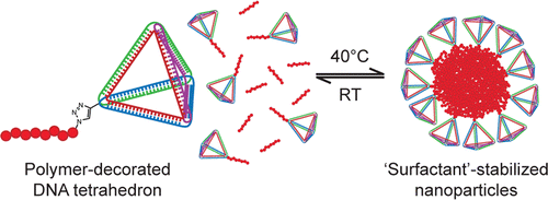 'Giant Surfactants' Created by the Fast and Efficient Functionalization of a DNA Tetrahedron with a Temperature-Responsive Polymer, T. Wilks, J. Bath, Jan de Vries, J. Raymond, A. Herrmann, A.J. Turberfield, R.K. O'Reilly, ACS Nano, 2013, 7, 8561-8572. DOI:10.1021/nn402642a