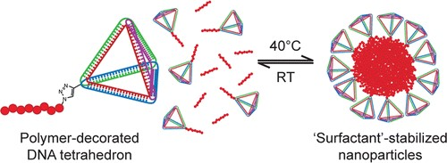 Image of nanoparticle constructs